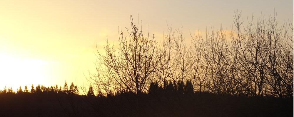 Sunrise over Lagan Meadows